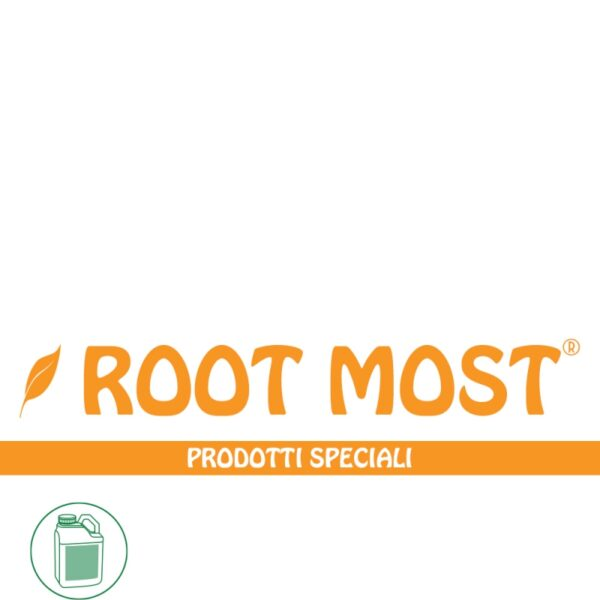ROOT MOST